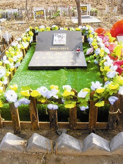 动物殡葬需求旺盛收费颇高 无害化处理路在何方